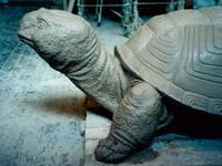 """Черепаха"" / Turtle"
